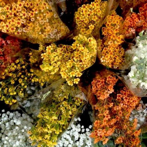 Fall Flowers | Bake or Break