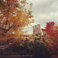 Fall in Brooklyn Bridge Park | Bake or Break